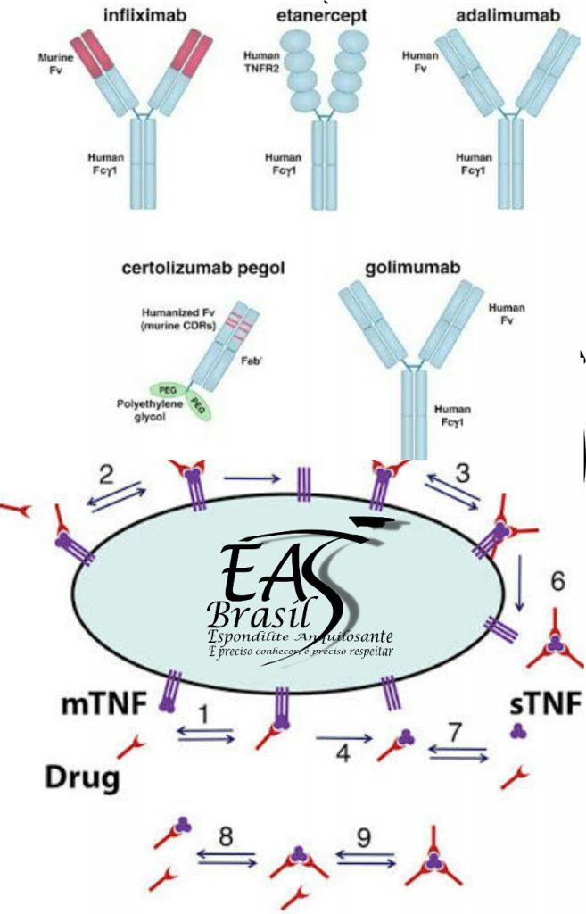 """alt=""""Pesquisa mostra tempo para constatar efeitos dos anti-TNF"""""""